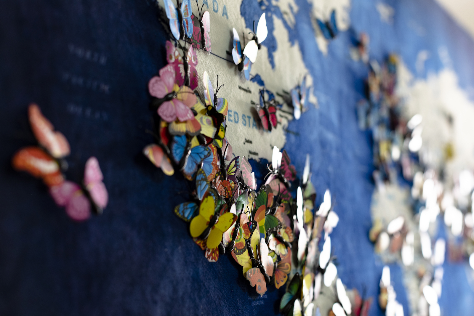 map with butterflies