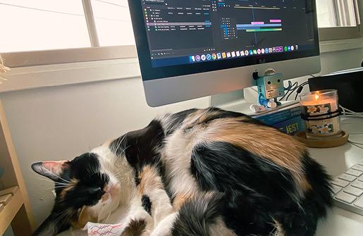 cat sleeping thumbnail