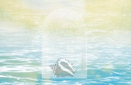 illustration of a shell thumbnail